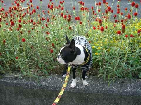 Flower_w_haru_2